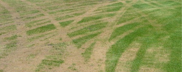 Tire Tracks in Turf - Weed and Feed Lawn Care